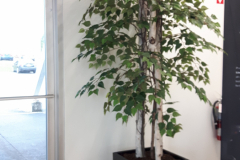 Artificial White Birch tree in a Lechuza Cubico 40 container.