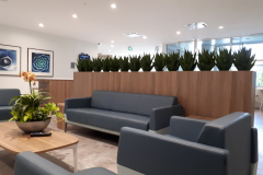 Artificial Agave plants in a custom linear planter divide a lounge area from cafeteria seating area in a large corporate lunchroom in Mississauga.