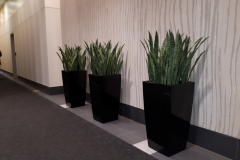 Artificial Snake Planrs in Lechuza Cubico containers in an Ottawa office tower lobby