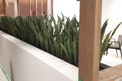 Artificial Snake Plants in a custom planter act as a space divider in this condominium sales office