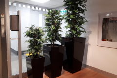 Artificial Aralia Trees in Lechuza Cubico containers provide privacy in this downtown Toronto automobile dealership