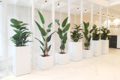 Artificial Rubber plants and Bird of Paradise direct traffic flow in this upscale condominium sales office in Toronto