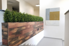 Artificial boxwood in a custom plywood planter in this Kitchener head office building