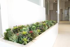 Artificial succulent garden in a luxury spa area of a Liberty Village new condo