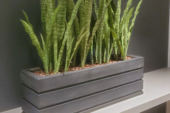 Artificial Snake plants in a large table-top planter add greenery to  a dark corner of this Hamilton office