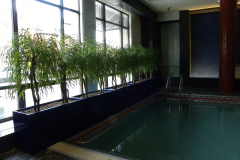 Artificial weeping willow trees act as a privacy screen in a pool area.
