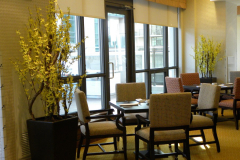 Artificial forsythia bushes add colour to a retirement residence dining area.