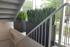 Artificial Snake plants in custom planters add greenery to a customer entrance