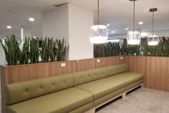 Hamilton office cafe planters with artificial Snake Plants