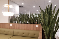 Artificial Snake Plants frame a cafe seating area in Hamilton
