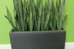 Artificial Snake Plants in Lechuza Cararo container