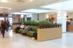 Artificial grass plants used in a Toronto area healthcare facility