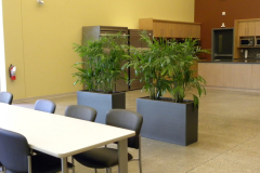 Bamboo palms in Earthwall planters act as a room divider in a large corporate lunchroom