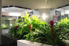 Mixed tropical and flowering plants in a fixed lobby planter in an Oakville office tower lobby