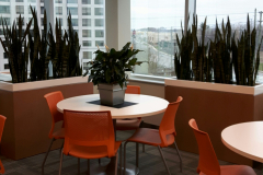 Custom planters in a Vaughan office lunchroom with Snake Plants