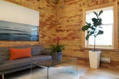 Ficus lyrata (Fiddle-Leaf Fig Tree and a bromeliad add ambience to this client waiting area