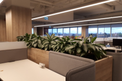 Aglaonema 'Diamond Bay' in a custom planter in a Toronto office