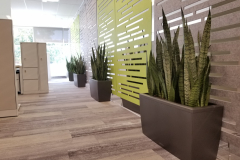Snake plants in Lechuza Cararo containers add interest to an acoustic wall, and serve as a barrier to protect it from damage.