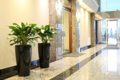 Aglaonema 'Diamond Bay'  in Rondo containers in an Oakville office tower lobby