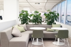Schefflera 'Amate' (Umbrella Trees) act as a space divider in this Toronto office collaboration area