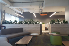 Custom planters with Dracaena 'Art' in a Toronto office