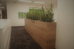 Sansevieria Snake Plants in custom wooden planter warm up a file area in a Mississauga office