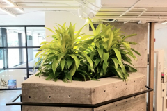Limelight Dracaena brighten a modern concrete planter in this Toronto office entrance.
