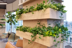 Assorted pothos varieties accent a pillar