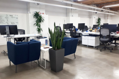 Low light plants brighten a windowless office space.