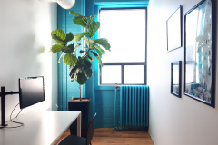 Fiddle-Leaf Fig tree in a small private conference room.