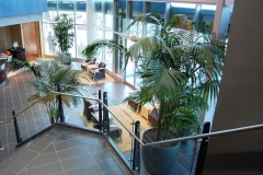 15 foot tall Kentia Palm (Howeia forsteriana) and 12 foot Lady Palm (Rhapis excelsa) used in a large Toronto commercial office building reception area