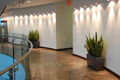 Cararo planters with Snake plants accent and enhance a corridor