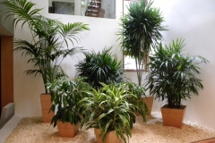 Bamboo Planters with premium tropical plants in a Toronto residence