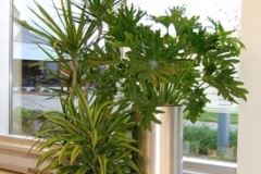 A grouping of Dracaena marginata, Dracaena 'Lemon Lime' and Philodendron selloum in Meta-Clad decorative containers