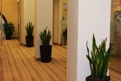 Cubico planters with Snake plants accent small Toronto office