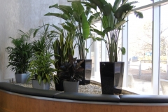 Modern planters with assorted tropical plants in large Mississauga office building lobby