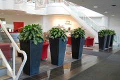 Tall, high impact planters direct traffic flow in large Brampton office reception area