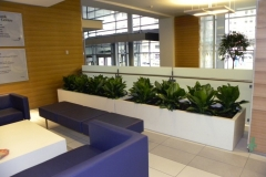 Aglaonema 'Diamond Bay' fill a custom planter in a Toronto Hospital waiting area