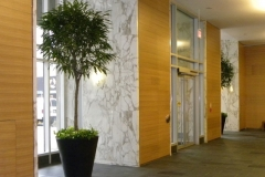 Ficus alii (Weeping Ficus) with Pothos understory plants enhance the alcoves in this Toronto hospital lobby