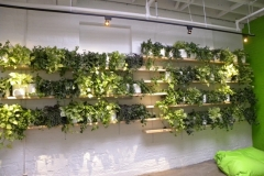 Green plant wall in a modern loft-style Toronto office