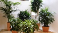 Live Interior Tropical Plants