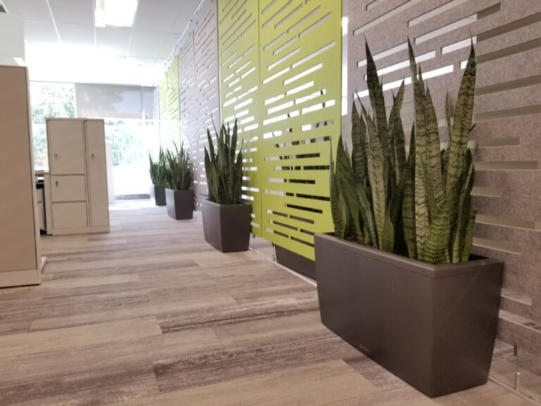 Welcome employees back to the office, Snake plant, Sansevieria, Cararo, Lechuza