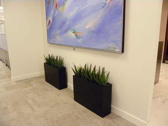 Ordinaire Small Artificial Agave Plants In Narrow Modern Containers In A Toronto  Office