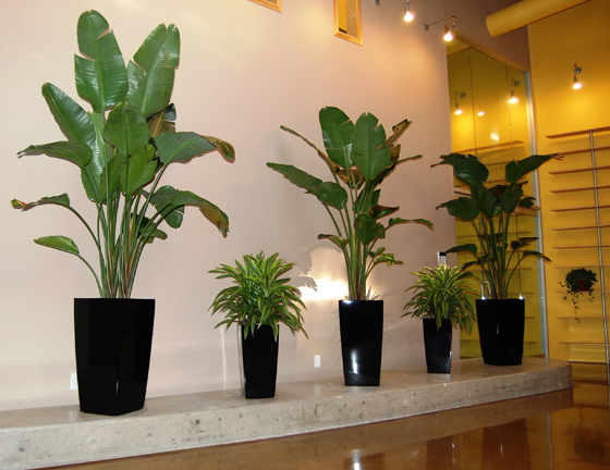 i need plants for my office who do i call