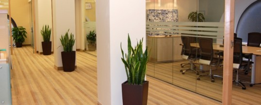 Plant of the Month- Snake Plant