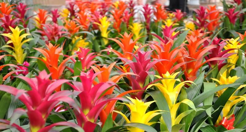 Tropical office plants Full Sun Office Plants Tips Ideas Plantpros Inc Colourful Tropical Office Plants