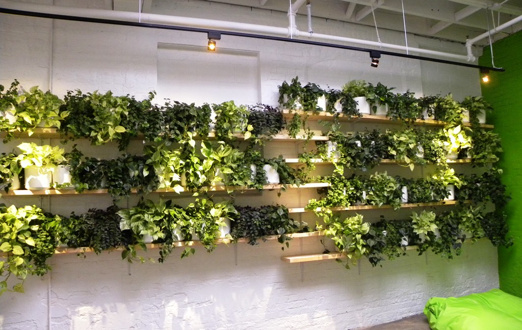 Considering a living wall look at our simple low cost for Living plant walls