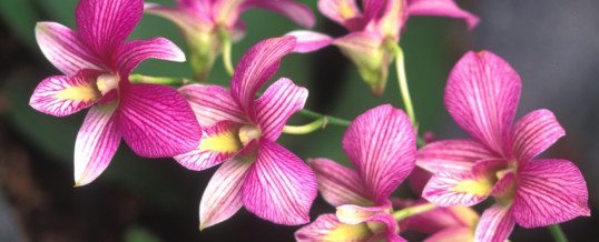 Plant of the Month – Orchid