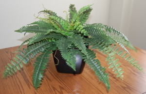 Artificial Boston Fern