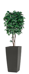 Artificial Benji Tree 6ft
